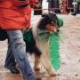 22.02.2015 Выступление собак на Масленице