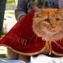 6.06.2015 Выставка бывшебездомных котов