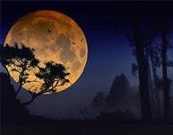Проделки Луны (6+)