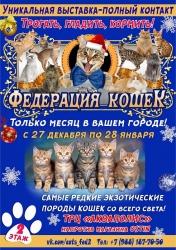 Федерация Кошек, выставка (0+)