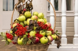 «В саду срывает осень яблоки…», выставка композиций из яблок (0+)