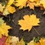 Листья желтые, живопись