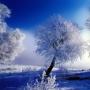 Белые стихи зимы, выставка