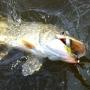 Псковская уха, рыболовный фестиваль