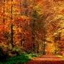 Золотая  волшебница Осень