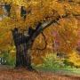 Золотая осень, познава-тельная программа для дошкольников