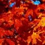 Осенний листопад, выставка