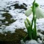 Весна неизбежна, выставка