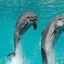 Российский дельфинарий