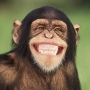 Контактный зоопарк «Мир обезьян»