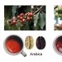Дегустация кофе: робуста и арабика (0+)
