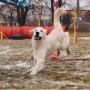 Благотворительный Dog Open Air (0+)