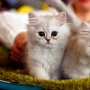 «ЗаМУРчательные кошки», Международная выставка кошек (0+)