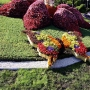 Выставка цветов «С любовью к городу» (0+)