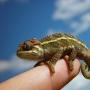 Фауна тропиков, выставка насекомых и рептилий (0+)