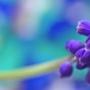 «Ольгин день» в Тригорском. «По вкусу своему деревья и цветы». Выставка цветов (0+)