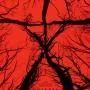 Ведьма из Блэр: Новая глава (18+)