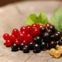 Смородиновый день в Тригорском, музейный праздник урожая смородины (0+)