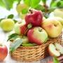 Вот яблоки так яблоки, на славу! - музейный праздник (0+)
