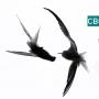 Мини-фестиваль «ПОЭТОПИКНИК: Свободный Воздух Поэзии» (12+)