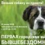 Выставка собак, взятых из приюта (0+)