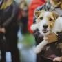 «Псковский сувенир», интернациональная выставка собак CACIB FCI (0+)