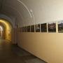 «Мир верхового болота», выставка (0+)