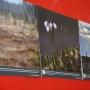 «Мир верхового болота», фотовыставка (0+)
