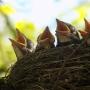 «Птицы нашего города», фотовыставка (6+)