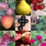 Выставка-продажа плодовых и декоративных культур (16+)