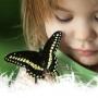 Выставка живых тропических бабочек в ТК