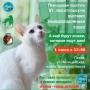 Выставка бывших бездомных кошек (0+)