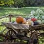 «…Веселый сад, где вместе Флора и Помона», осенняя выставка урожая (0+)
