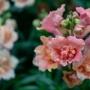 «Стихи природы. Цветы Пушкинского Заповедника», выставка (6+)