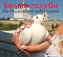 Белые голуби на Ольгинской набережной