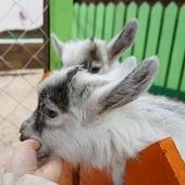 Птичий дворик, контактный зоопарк в Пскове