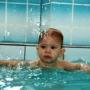 Дельфин, бассейн