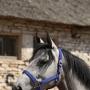 Родина, конно-спортивный клуб