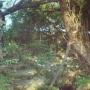 Ивовая лоза
