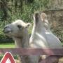 Зоопарк в д. Ашево